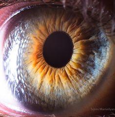 [Image] | 25+ Extreme Close Ups Of The Human Eye - TIMEWHEEL