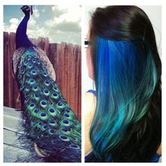 Peacock inspired hair OMG !!!!!!!!!