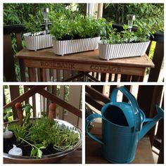 My herb garden on my back deck
