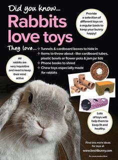 Rabbit toys to keep your bunny stimulated. Bunny Cages, Rabbit Cages, House Rabbit, Rabbit Toys, Pet Rabbit, Pet Bunny Rabbits, Baby Bunnies Care, Bunny Care Tips, Lionhead Rabbit