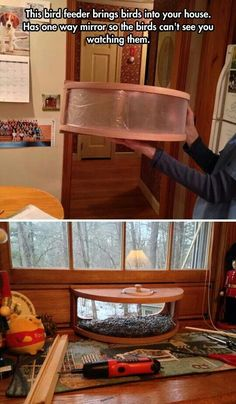Indoor bird feeder with one way mirror so they can't see you watching them
