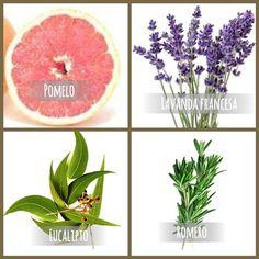 Aceites esenciales con efecto aromatico