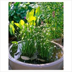 Two-plant container pond