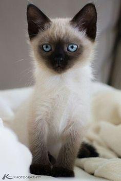 Cute kitty....