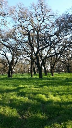 1000 Images About Stockton Ca On Pinterest Stockton California University Of The Pacific