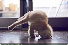 Yoga cat!