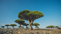 super/collider voyages to the idyllic island of Socotra, Yemen – one of the most isolated landforms on Earth Arabian Sea, Seattle Skyline, Landscape Photography, Life Is Good, Earth, Island, Nature, Beautiful, Travelling