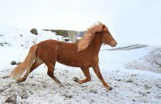 5. Fun in the snow. My beautiful Ísold