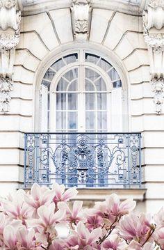 Paris Photography - Magnolia Blossoms under Balcony Fine Art Photograph