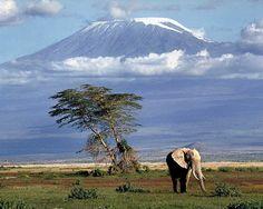 Elephant | Amboseli National Park, Kenya
