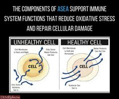 ASEA Redox supplement helps improve immune function and positively affects key health genes