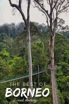 Squeeze the highlights of Borneo into the itinerary. Spot orangutans, proboscis monkeys, and pygmy elephants, snorkel with turtles, and explore the real jungle in Danum Valley! Borneo Travel, Malaysia Travel, Africa Travel, Orangutan Sanctuary, Borneo Rainforest, Laos, Glamping, Brunei, Malaysia