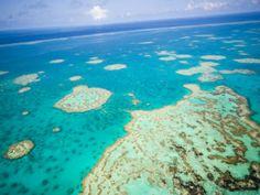 Great Barrier Reef Scenic Helicopter Tour and Cruise from Port Douglas, 1992 Beautiful Places In The World, Wonderful Places, Amazing Places, Daintree Rainforest, Vacation Wishes, Fishing Pictures, Helicopter Tour, Great Barrier Reef, Wonders Of The World