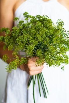 Fresh dill Fresh Dill, Raw Food Recipes, Food Photography, Vegetarian, Herbs, Foods, Vegan, Style, Food Food