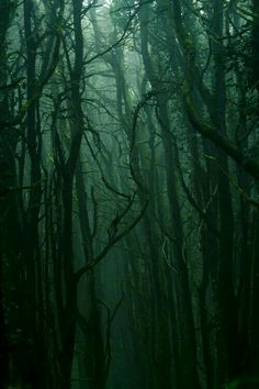 Image about aesthetic in aes/ slytherin by ShadowsOfDarkness Dark Green Aesthetic, Aesthetic Colors, Aesthetic Pictures, Nature Aesthetic, Wallpaper Harry Potter, Slytherin Aesthetic, Slytherin Pride, Dark Forest, Magic Forest
