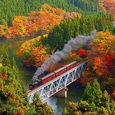Colored leaves and steam train, JR Tadami-Line, Fukushima, Japan Train Tracks, Train Rides, Train Trip, Train Journey, Beautiful World, Beautiful Places, Beautiful Scenery, Old Trains, Belle Photo