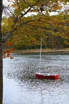 Bufflehead Cove Inn: view from the porch Maine, B & B, New England, Trip Advisor, Porch, Coast, Spaces, Vacation, Travel