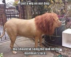 These extra-wholesome dog memes are giving us new life. Check out some of our favorite dog memes now and don't forget to pin your favorite! Read More: Hilarious Animal Memes That Will Make Your Day So Much Better Cute Animal Memes, Funny Animal Quotes, Animal Jokes, Funny Animal Pictures, Cute Funny Animals, Funny Animal Videos, Funny Cute, Funny Photos, Hilarious Pictures