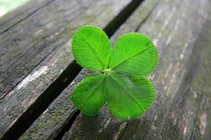 The four leaf clover is always a rare find. It supposed to bring with it good wishes and luck. via kaibara87 on flickr.com