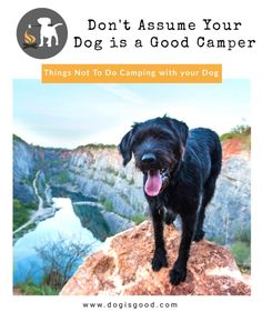 Things Not To Do Camping with your Dog: Don�t Assume your Dog is a Good Camper! Ready to hit the parks and campsites this summer? Want to bring Fido along with you? Must read list of things NOT to do when camping with your dog!