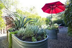 Galvanized planters in a secluded area at the rear of the house.