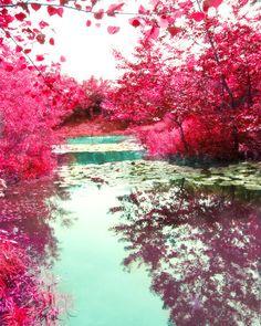 Pond Art Print - Red Trees Fall Home Decor Wall Art Aqua Water Reflection Soft Nature Rustic Photography. via Etsy.