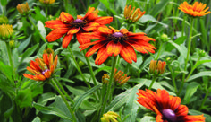 Horticulture, Garden, Plants, Inspiration, Biblical Inspiration, Lawn And Garden, Gardens, Plant, Outdoor