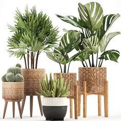 House Plants Decor, Plant Decor, Indoor Palms, Decoration Plante, 3d Models, Snake Plant, Exotic Plants, Indoor Garden, Potted Plants