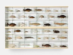 Damien Hirst, Isolated Elements Swimming in the Same Direction for the Purpose of Understanding > Objects