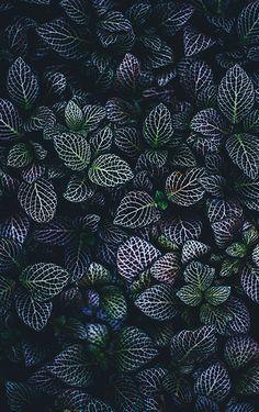 Free Flower Pictures on Unsplash 4k Phone Wallpapers, Wallpaper Iphone Cute, Pretty Wallpapers, Flower Wallpaper, Mobile Wallpaper, Wallpaper Backgrounds, Pretty Backgrounds, Crazy Wallpaper, Perfect Wallpaper