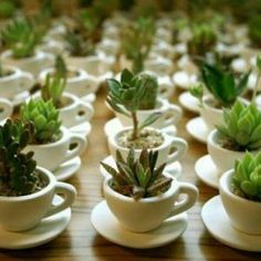 favors for bomboniere piante grasse favors for succulents - Small Plants, Cacti And Succulents, Planting Succulents, Planting Flowers, Succulent Wedding Favors, Wedding Favours, Party Favours, Succulent Favors, Wedding Cups