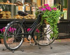Bicycle and Bakery Shop in Bassano Italy Photograph  - Bicycle and Bakery Shop in Bassano Italy Fine Art Print