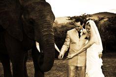 #safari wedding