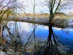 River, Nature, Outdoor, Outdoors, Naturaleza, Rivers, Nature Illustration, Outdoor Life, Garden