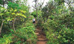 Kuli'ou'ou Ridge Trail - 20 Great Oahu Hikes - Honolulu Magazine - September 2013 - Hawaii