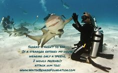 Sharks aren't so bad! Funny little shark humor! Diving quotes, shark quotes. hi fiving the diver. Water Bearer Foundation raises money for ocean conservation, preservation awareness and marine biology scholarships! Pick up a shirt or decal and make a difference! www.WaterBearerFoundation.com buceoando , buceo,