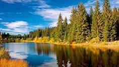Nationalpark Bayerischer Wald - Wildnis im größten Urwald Europas - Wandern, Deutschland,