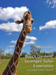 11 reasons to love Busch Gardens' Serengeti Safari Experience!