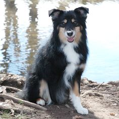 Cassidy, a 3-legged rescue whose owner uses him to inspire disabled children. http://www.herodogawards.org/meet-the-2013-hero-dog-awards-finalists