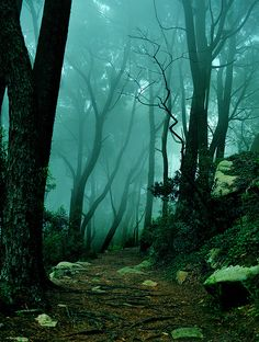 Midnight Garden: In the ~ The Mystic Forest, Sintra, Portugal ~ 11 Mind Blowing Photos of Unreal Places. Beautiful World, Beautiful Places, Beautiful Forest, Lovely Things, Dark Forest, Forest Path, Misty Forest, Foggy Forest, Forest Trail