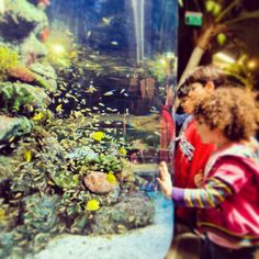 Clownfish @Turkuazoo Akvaryum aquarium