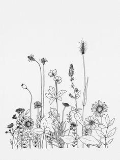 Wildflowers Framed Art Print by wildbloomart Flower Line Drawings, Flower Sketches, Art Sketches, Art Drawings, Pencil Drawings, Wildflower Drawing, Wildflower Tattoo, Floral Drawing, Simple Flower Drawing