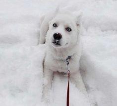 El primer día de nieve de Kiora