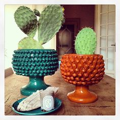 Cactuses from Liselotte Watkin's home