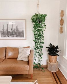 Living Room Plants, House Plants Decor, Living Room Decor, Hanging Plants, Indoor Plants, Marble Queen Pothos, Home And Deco, Diy Home Decor, Wall Decor