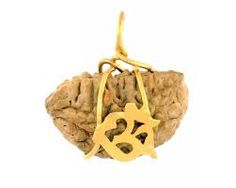 Rudraksha is frequently produced using the wild berry seeds or nutsof the trees.