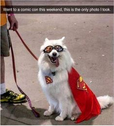 Funny Animal Pictures with Captions to Make You LOL - 9