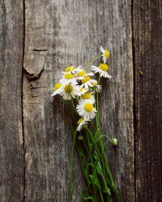 Seasons: Spring by Nadezda Soboleva on Etsy