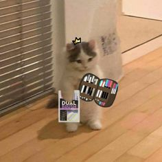 Gato Anime, Anime Cat, Manga Anime, Cat Profile, Sad Cat, Cat Icon, Cute Pastel Wallpaper, Cat Stands, Baby Cats