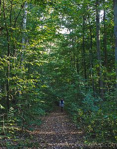 Podkowa Leśna